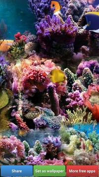Ocean Fish HD Wallpapers apk screenshot