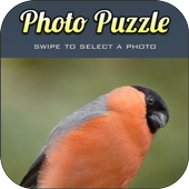 Puzzle Birds for Android icon