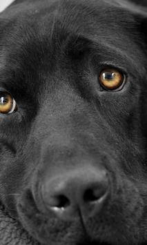 Perros y Gatos - Puzzles screenshot 11