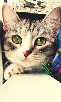 Perros y Gatos - Puzzles screenshot 15