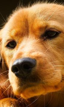 Perros y Gatos - Puzzles screenshot 17