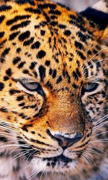 Rompecabezas - Felinos capture d'écran 2