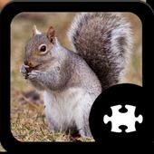 Squirrel Puzzle icon