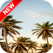 Palm Tree Wallpapers icon