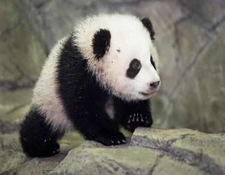 New Panda PF apk screenshot