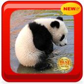 New Cute Panda PF icon