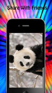 Panda Wallpapers apk screenshot