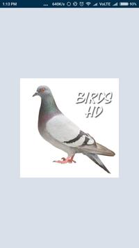 Bird & Animal HD Photography poster