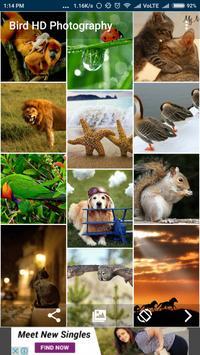 Bird & Animal HD Photography apk screenshot