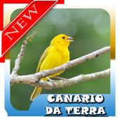 Femea canario da terra Mp3 icon