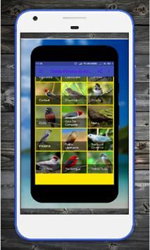 Femea dos Pintassilgo MP3 screenshot 3