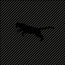 Panther TV aplikacja