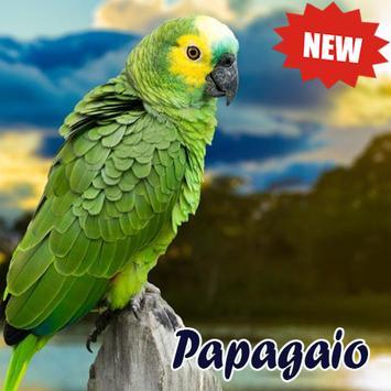 Cantos De Papagaio poster
