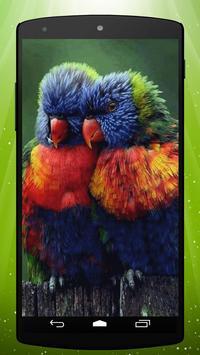 Parrots Live Wallpaper apk screenshot