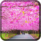 Peach cherry blossom wallpaper icon