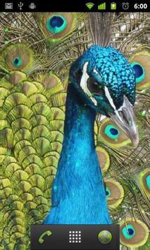 peacocks wallpaper apk screenshot