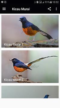 Kicau Murai Master poster