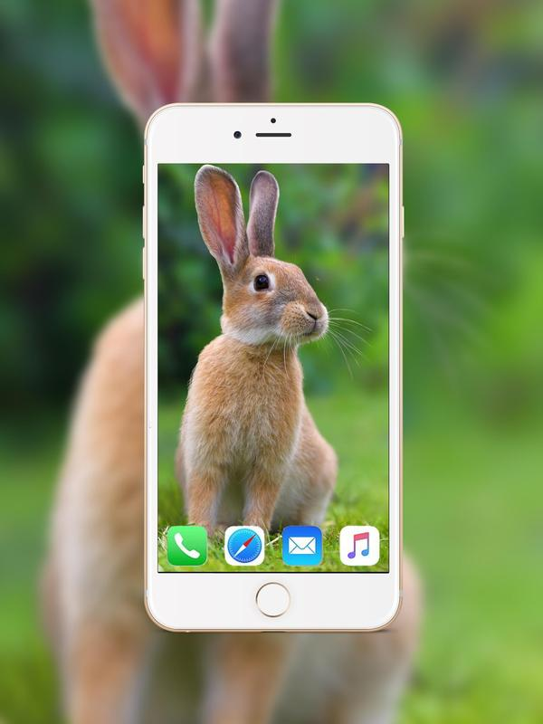 Rabbit Wallpaper HD poster ...
