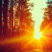 perfect sunrise live wallpaper icon