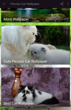 Persian Cat Wallpaper poster