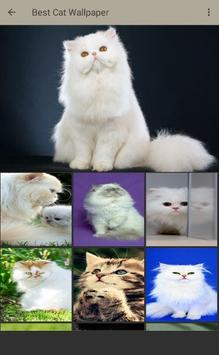 Persian Cat Wallpaper screenshot 2