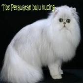 Perawatan Kucing Persia icon