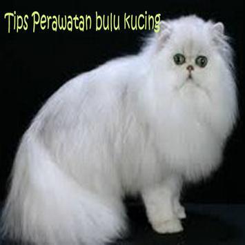 Perawatan Kucing Persia poster