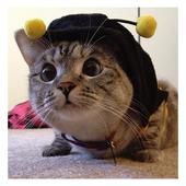 PET CAT icon