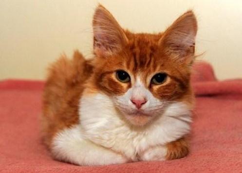 PET CAT screenshot 3