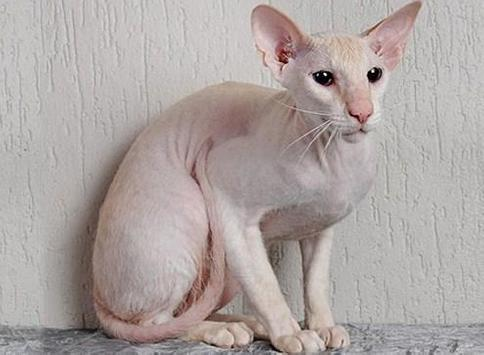 PET CAT poster