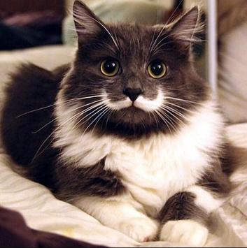 PET CAT screenshot 10