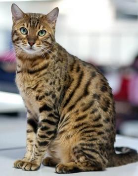 PET CAT screenshot 11