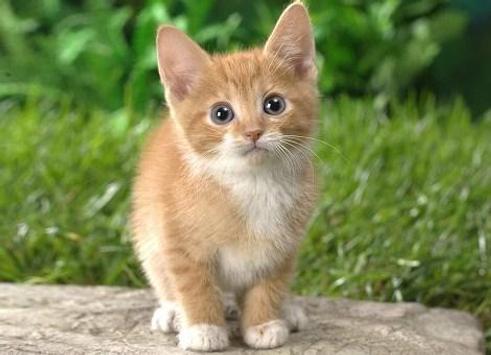 PET CAT screenshot 12