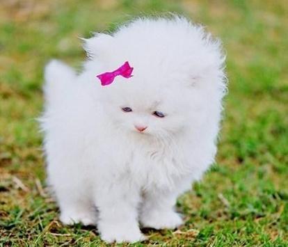 PET CAT screenshot 14