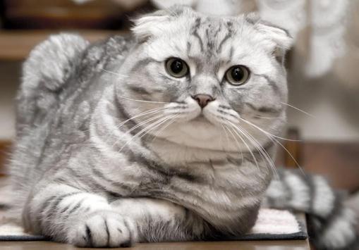 PET CAT screenshot 1