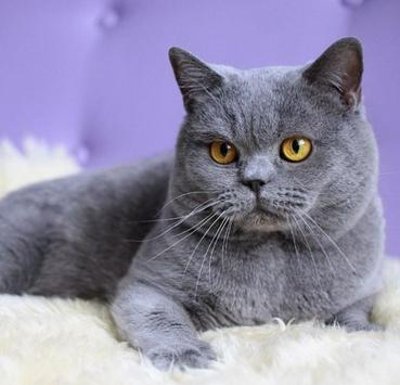 PET CAT screenshot 2