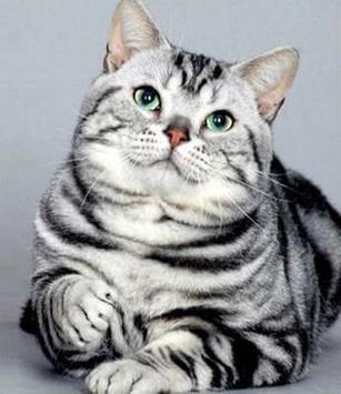 PET CAT screenshot 7
