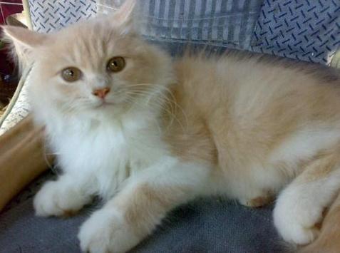 PET CAT screenshot 4