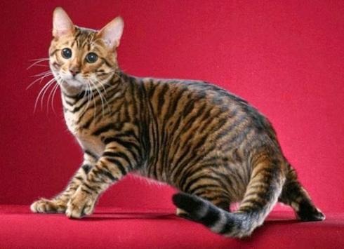 PET CAT screenshot 5