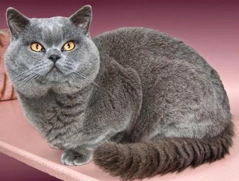PET CAT screenshot 6