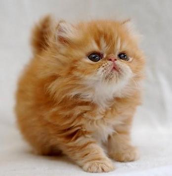 PET CAT screenshot 9