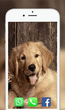 Dog Wallpapers 2018 screenshot 3