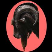 Glock - Free Widget Goat Clock icon