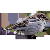 bird game icon