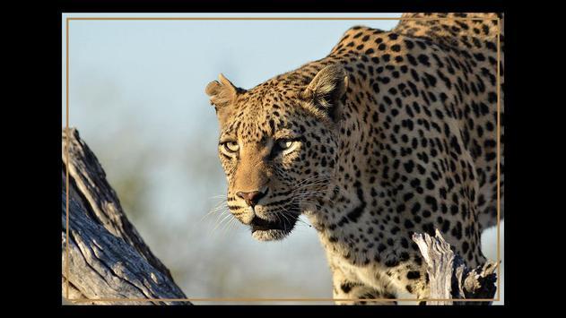 Kruger Park Wildlife Book 2.0 poster