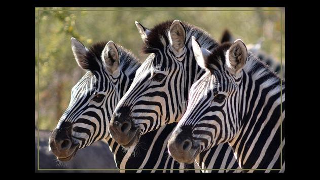 Kruger Park Wildlife Book 2.0 apk screenshot