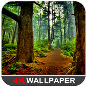 Forest Wallpapers (4K) icon