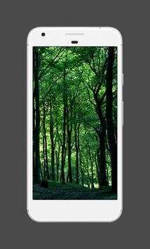Forest Wallpapers (4K) screenshot 1