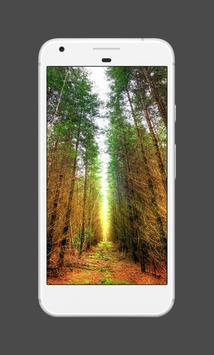 Forest Wallpapers (4K) screenshot 2