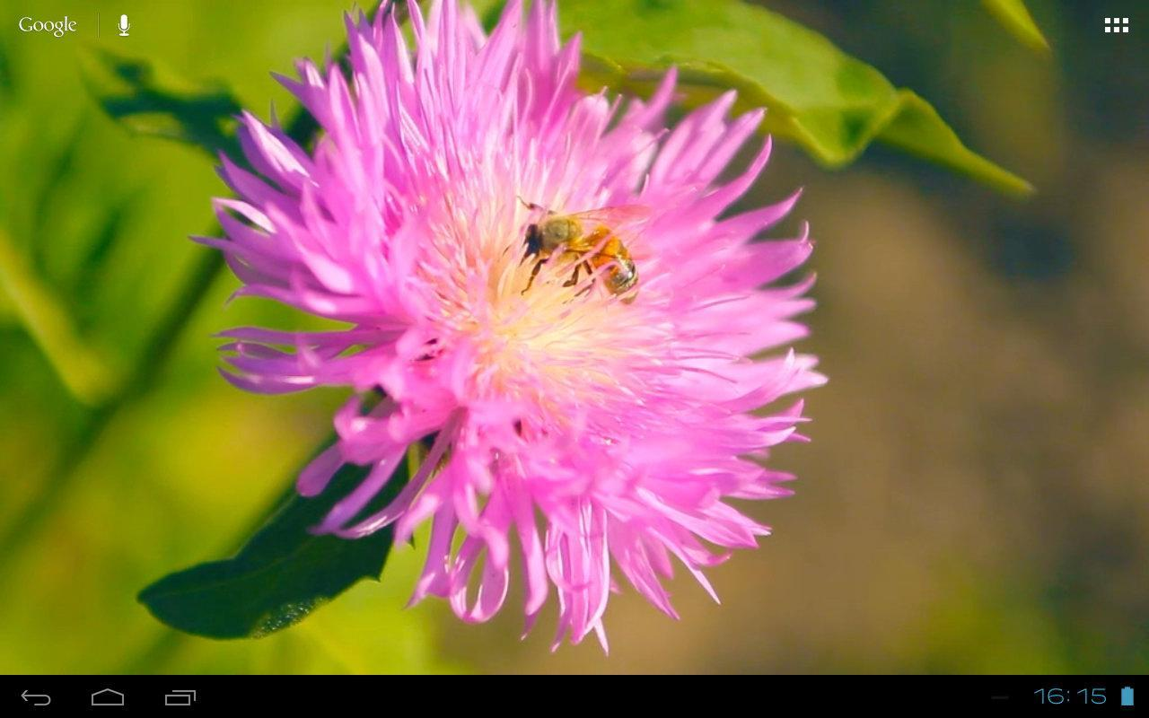 Happy Bee On A Pink Clover Flower Apk Download Free